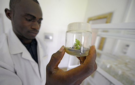 An African student in a lab holding a sprouting plant in a jar